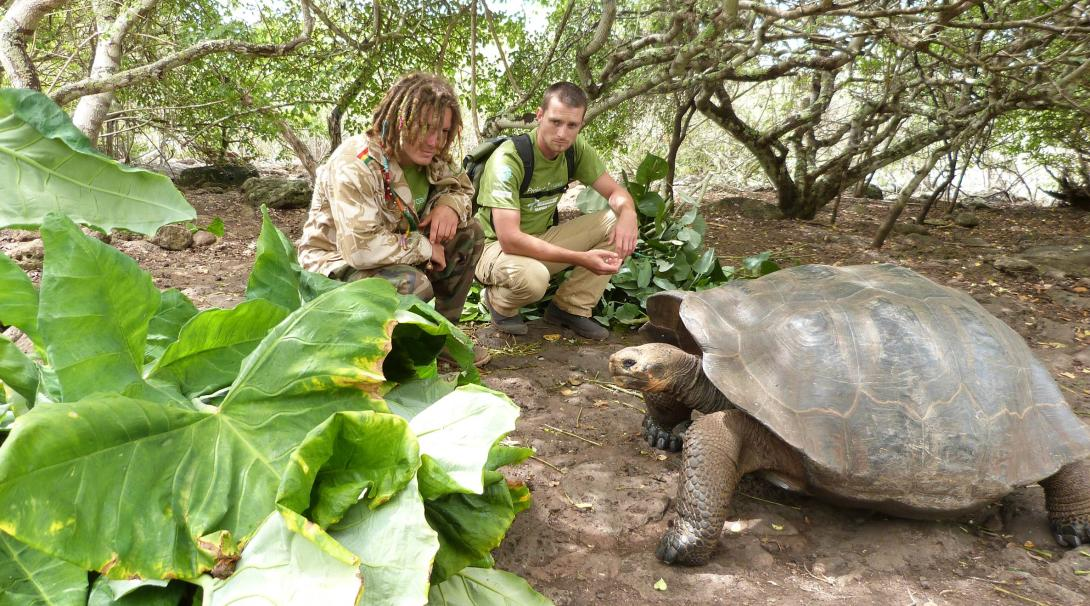 Tortoises get fed as part of conservation efforts in Ecuador.